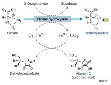 c_fig11_02_hydroxylation of proline in collagen proteins